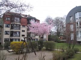 Moderne EG Wohnung mit Terrasse, Gartenanteil, PKW-Stellplatz, EBK. Moltkeviertel.